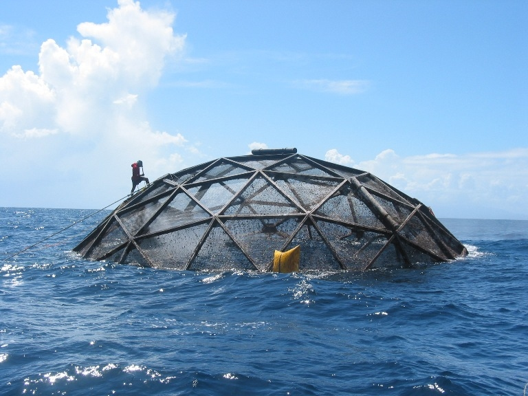 Proudest monkey what s aquaculture got to do with it for What is fish farming